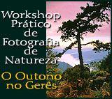 Workshop Prático de Fotografia de Natureza
